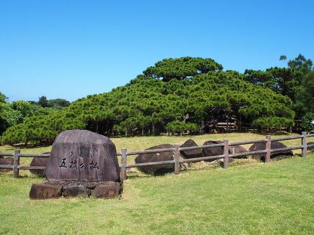 五枝の松と書かれた石碑