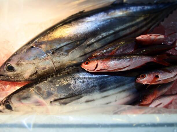 伊良部島から調達した魚