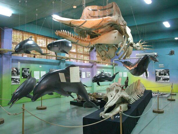 イルカやクジラに関する壮大な展示物