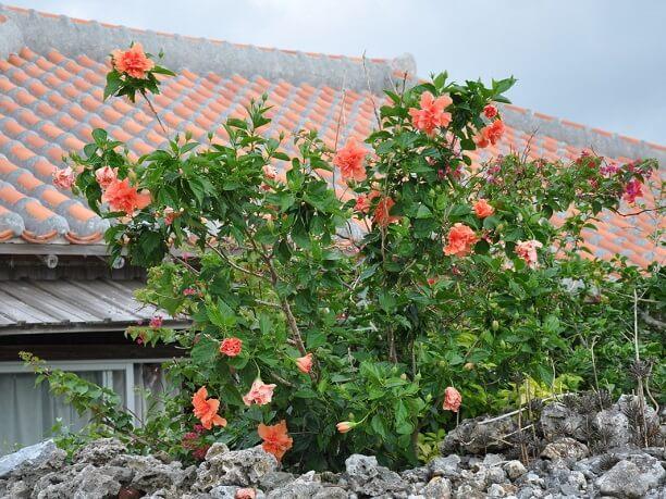 綺麗な花をつける植木