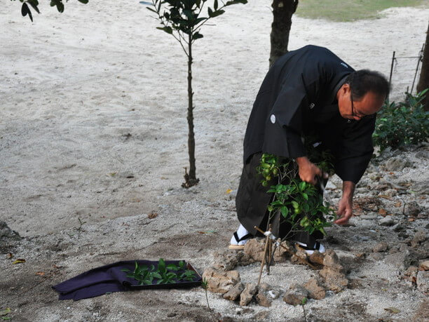 イバンの葉を取る儀式