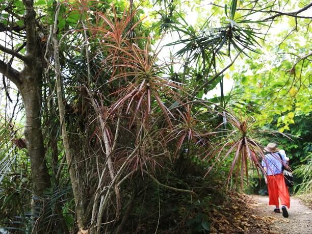 鬱蒼と生い茂る亜熱帯の森