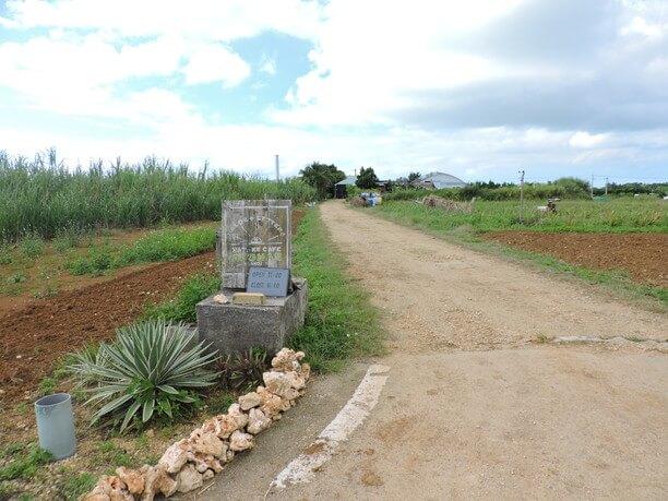 アロエ畑が広がる風景