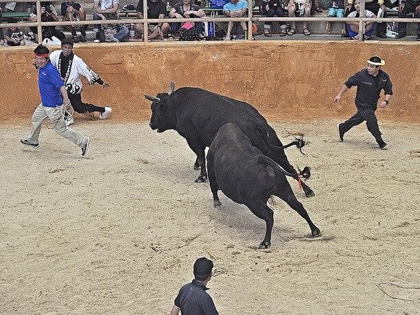 勢いのついた牛