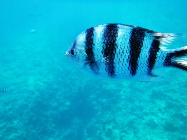 色とりどりの熱帯魚たち