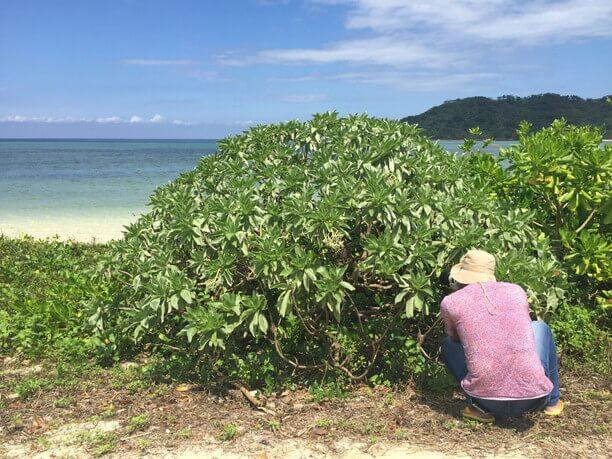 海辺のモンパノ木を覗き込む仲程長治さん