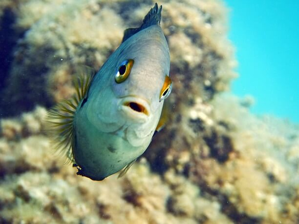 熱帯魚がお迎え