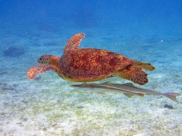 ウミガメの生息地