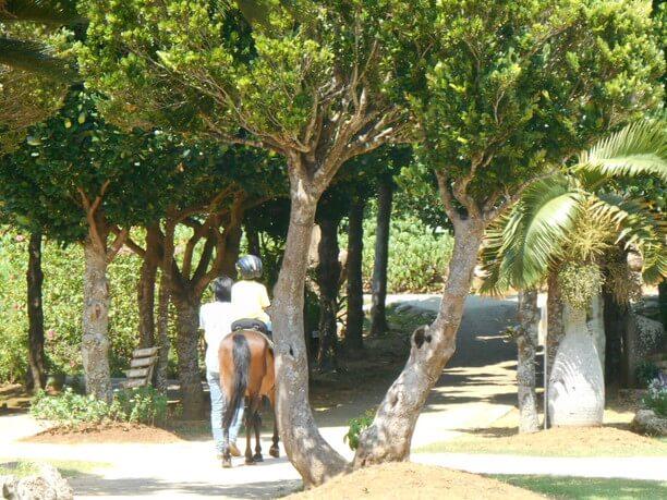 宮古馬と触れ合える宮古馬の引き馬体験