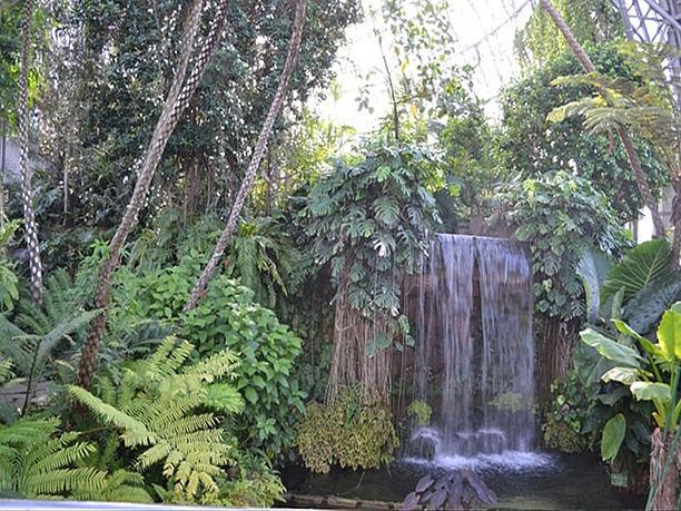 夢の島植物館内観