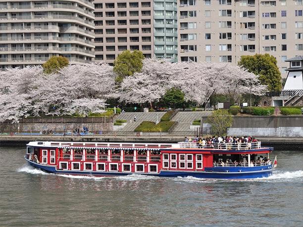 水上バス 桜