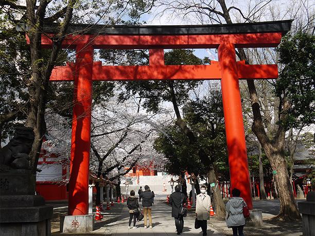 桜と大鳥居
