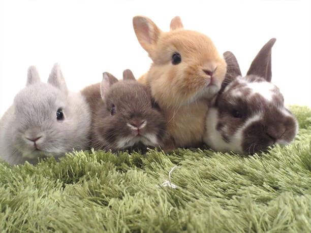 可愛いウサギさん