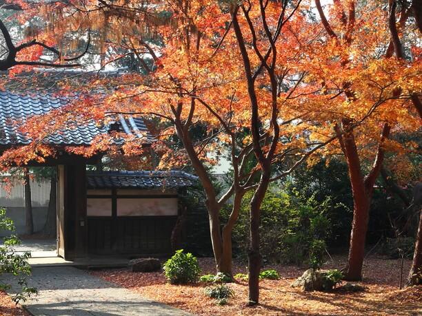 秋の三光院