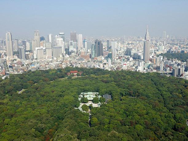 上空から見た永遠の森