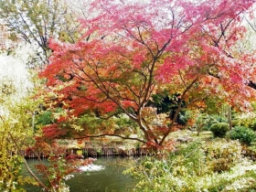 素晴らしい紅葉
