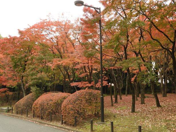 色ずく紅葉が美しい「千鳥ヶ淵さんぽみち」