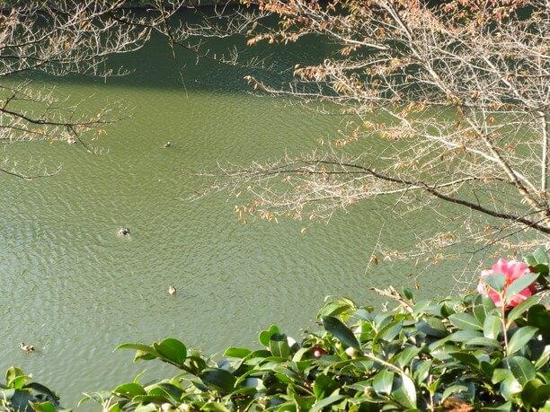 水鳥が気持ちよさそうに泳ぐ池