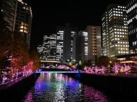 冬に輝く目黒川の桜目黒川みんなのイルミネーション2017