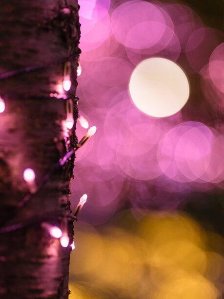 桜色LED「冬の桜®」