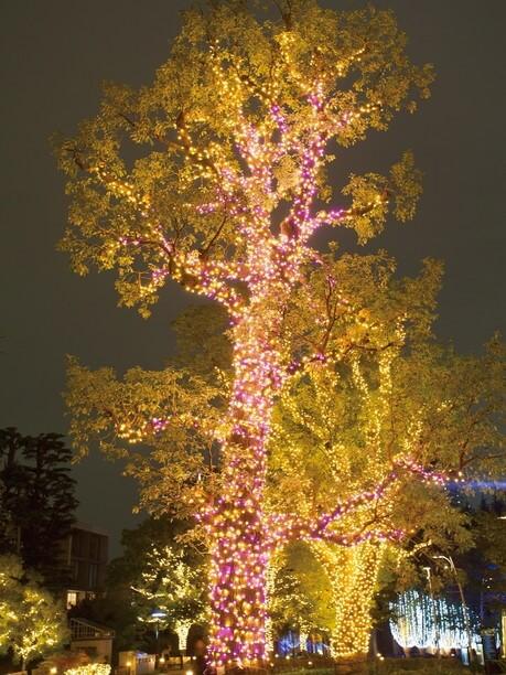 樹齢約70年のクスノキ「奇跡の木」