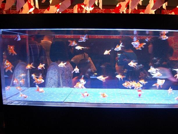 日本最大級の金魚展示ゾーン