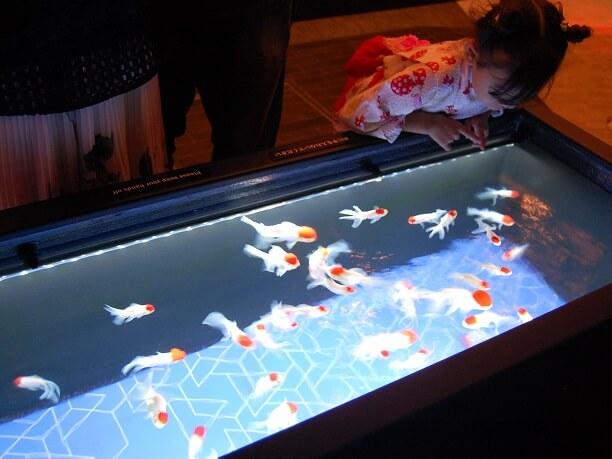 日本各地や海外の珍しい金魚も展示